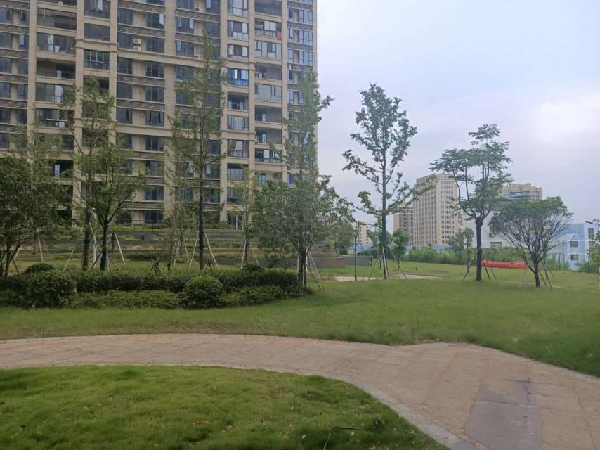 南山公园 就读新双峰小学 龙庭花园精装三房