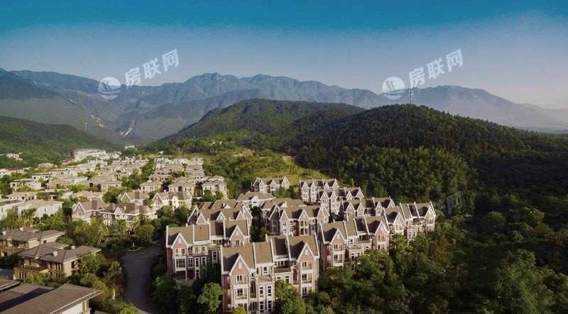 信华·映日荷花的实景图