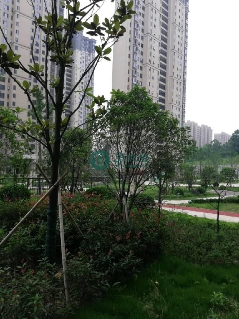 龍庭花園的實景圖